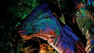 Un parasaurolophus à l'exposition Jurassic World, Field Museum, Chicago.