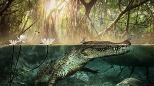 Artistic reconstruction by artist Dawid A. Iurino of Crocodylus checchiai, which lived more than five million years ago