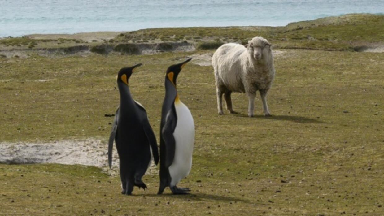 Brexit concerns blowing a gale across nervy Falklands
