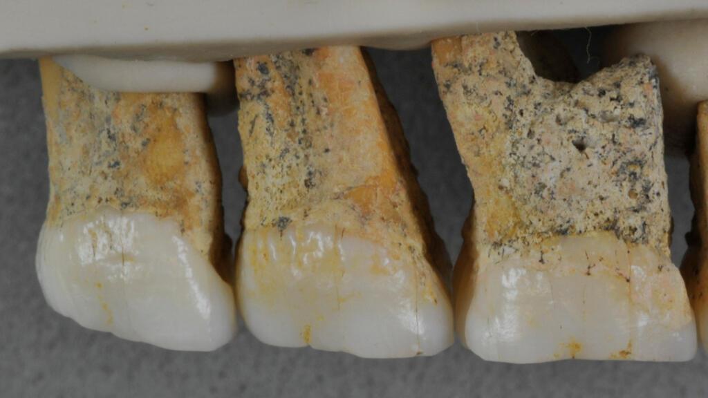 Científicos revelan que el tamaño de los dientes desenterrados son diminutos, en comparación a los humanos modernos.