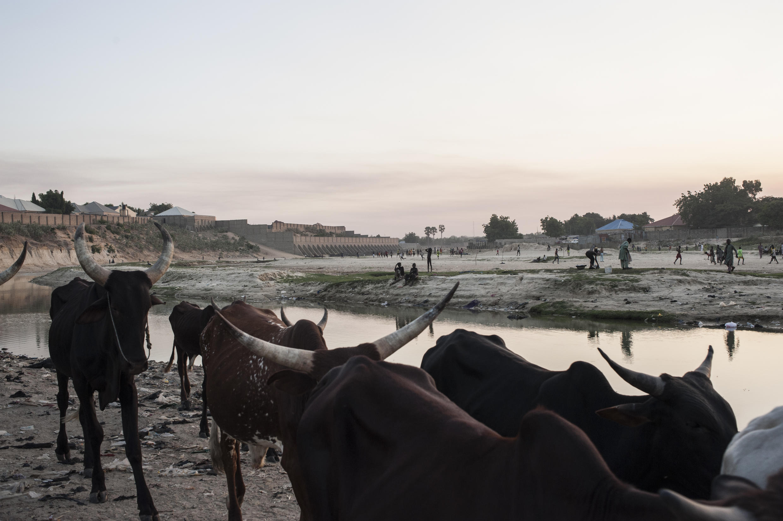 Dans la région du Maiduguri, dans le nord-est du Nigeria, le long du fleuve Ngadda, près du lac Tchad, le 6 décembre 2016.