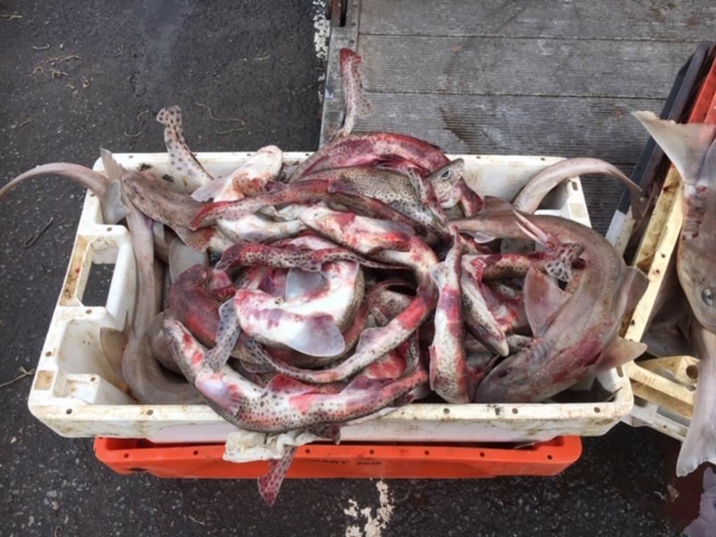 Retour de pêche sur le port d'Ilfracombe