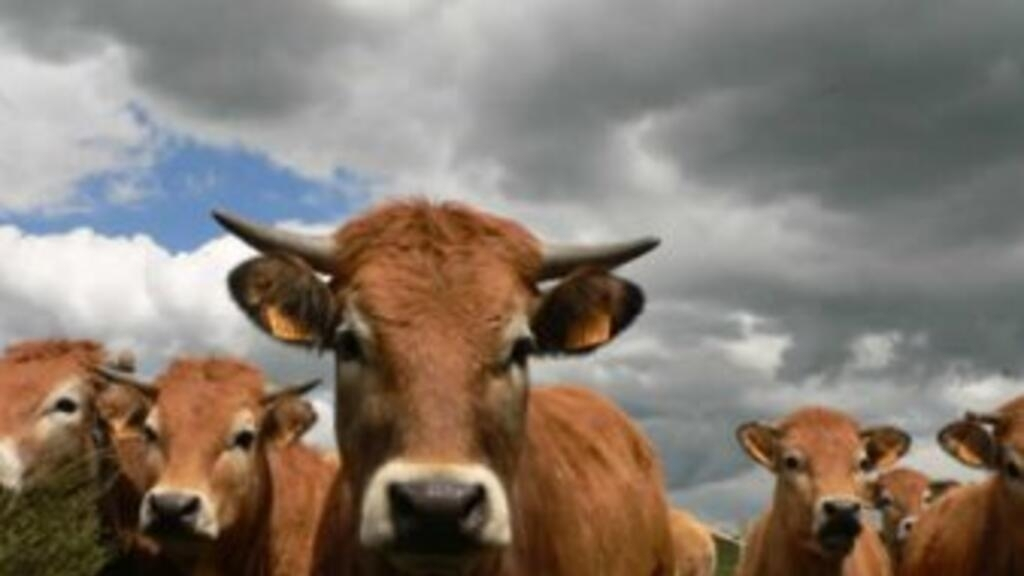 French farmers see red at 'meat-free day' campaign