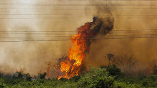 Brazil's national space agency, INPE, identified 3,506 fires from January 1, 2020 to July 22, 2020 in the Pantanal, a 192 percent increase from 2019 and the most for the period since records began in 1998