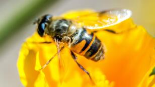 La France comptait en 2015 entre 1,25 et 1,3 million de ruches.