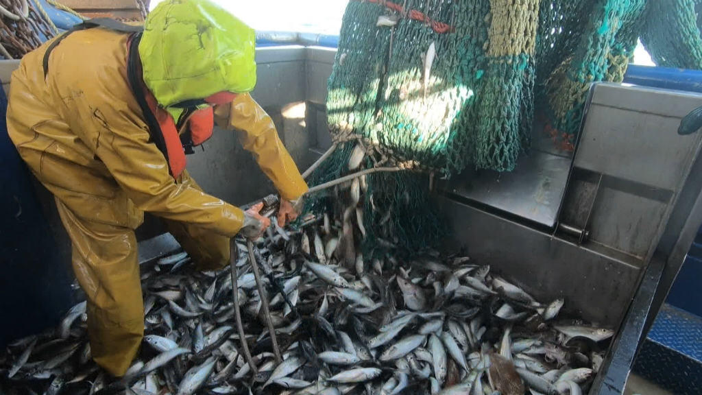 Brexit, a sea of uncertainty for fishermen