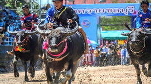 Farmers near Bangkok have kept up traditional buffalo racing as a way to mark the start of the annual rice planting season