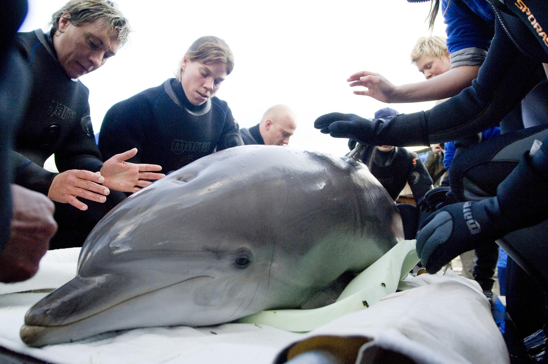 parc-asterix-dauphins-animaux-delphinarium