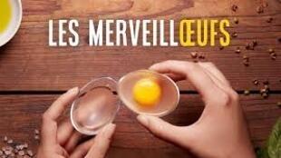 مهندستان فرنسيتان تطوران بيضا اصطناعيا مغذيا يشبه بيض الدجاج