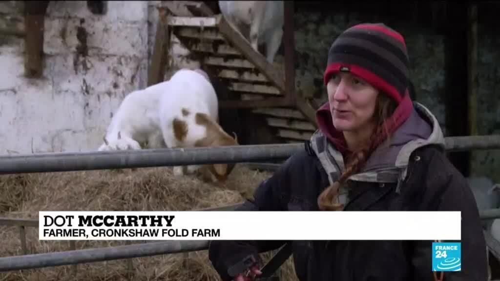 2021-02-11 09:13 No kidding: Video calls with goats boost British farm