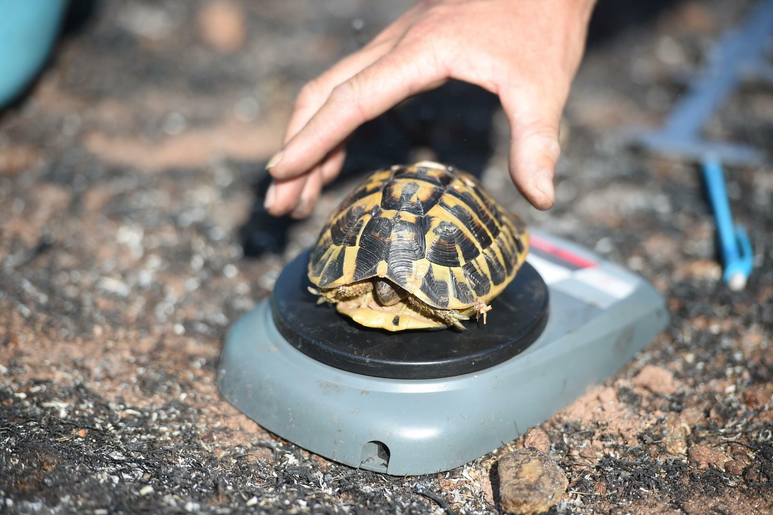 Tortoises first appeared on Earth around 250 million years ago