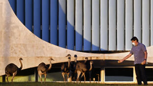 El presidente de Brasil, Jair Bolsonaro, alimenta aves  frente al Palacio Alvorada en Brasilia, Brasil, en medio de la nueva pandemia de coronavirus COVID-19, el 17 de julio de 2020.